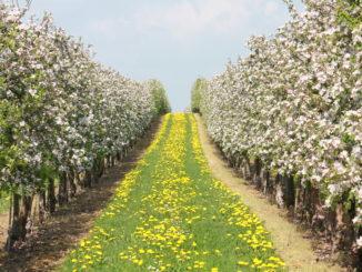 Blütenfest Dürrweitzschen, Foto: Stadt Grimma