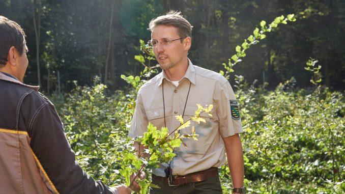 Revierförster berät zum Waldumbau - Foto: Sachsenforst
