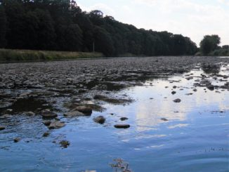 Niedrigwasser in der Mulde - Foto: Petra Hahn